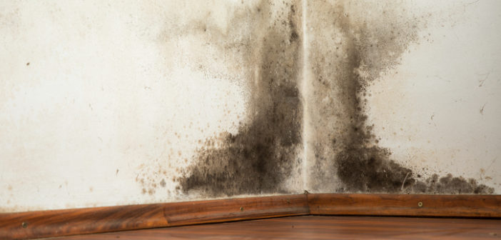 mould on a wet wall