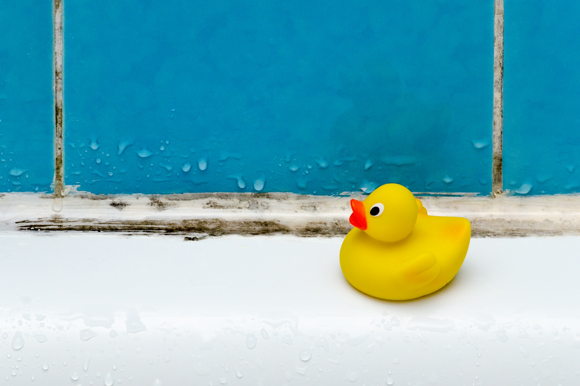 Picture of mouldy tub with a rubber duck toy