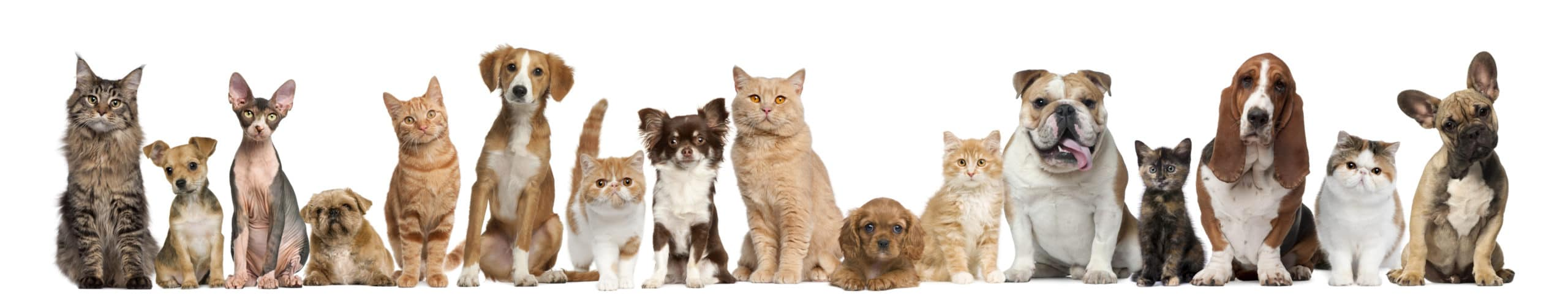 Picture of animals lined up