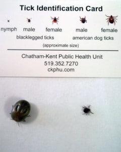 ticks brought to us