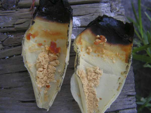 The waxy substance left in the tube after ear candling is actually candle wax.